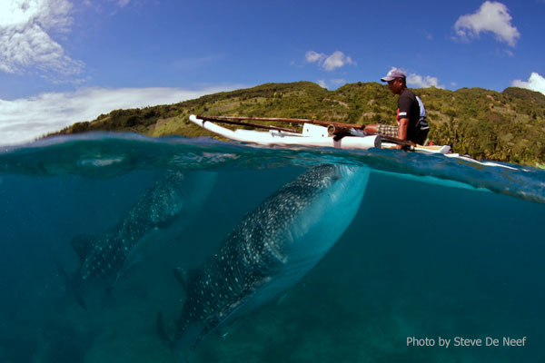 tours-whale-sharks-in-oslob.jpg